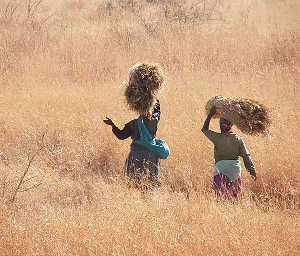 Thatch Grass Cutters, South Africa