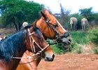 Horseback Riding and Wildlife Safari in Tanzania