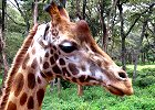 Magnificent Kenya Adventure Safari 7 days