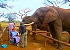 Wheelchair Friendly Big 5 Safari and Zululand