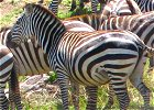 7 day Kenya Wildlife and Cultural Safari