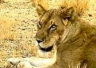 Discover the Wilds of North Kenya 7 Days
