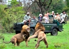 Sabi Sand Exclusive Safari - 5 Days, direct from Cape Town.
