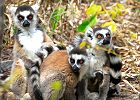 Nature & Culture Tour of Madagascar